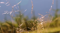 Grass, Trees and Morning. Follow Focus Stock Footage