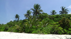 Tropical Breezes on Beach in the Indian Ocean on the Seychelles Islands - stock footage