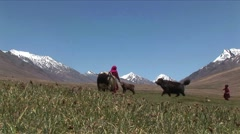 female peasents with yak in pastures - stock footage