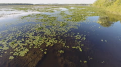 Lake Backwater Lilypad Fly Over Stock Footage