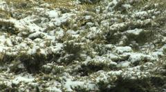 Snow on Shrubs Stock Footage
