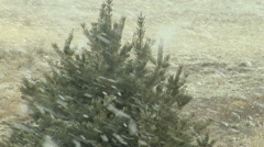 Bog Snow Flakes Blow Past Lone Tree in the Prairie Stock Footage