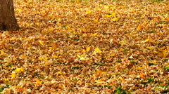 Falling Leaves In Autumn 4K - stock footage