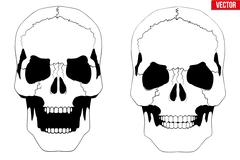 Human skull with open mouth in sketch style - stock illustration