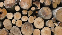 Pan shot of Firewood stack - stock footage