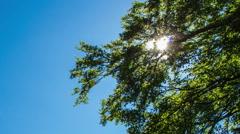 Sun shine tree leaves Arkistovideo