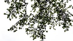 Stock Photo of tree silhouette in the park