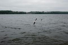 Bird over water - stock photo