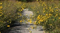 Prairie Sunflower Trail Stock Footage