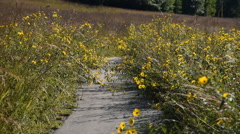 Paved Prairie Path with Flowers and Grass Stock Footage