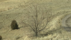 Cold Wind Whips Through Russian Olive Tree on Plains Stock Footage