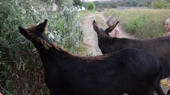 Boy and girl next door with two donkeys in the wild Stock Footage