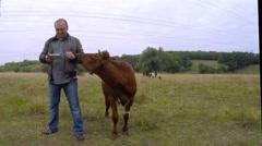 Cowboy reading an e-book. Cow Licks jacket sleeve. Stock Footage