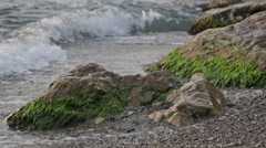 Sea vrlna break about the stones overgrown with green ooze Stock Footage