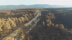 Burnt pine tree forest with road and car, aerial view Stock Footage