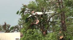 Tree Debris Stock Footage