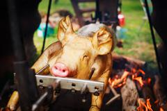 Roasting young pig in the fireplace - stock photo