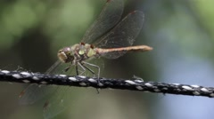 Dragonfly on clothesline - stock footage