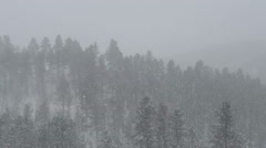 Spring Snow in the Black Hills Stock Footage