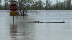 Spring flood sends river over  bank covering roadway Stock Footage