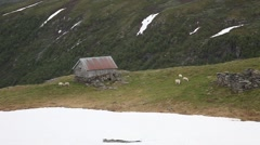 Log cabins and sheep on grassland in the Norwegian mountain plateau Stock Footage