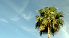 Tropical Breezes Stock Footage