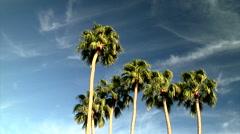 Palm Trees Sway in Warm Arizona Desert Breezes Stock Footage