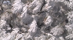 Close view of a tree covered with snow.  Stock Footage