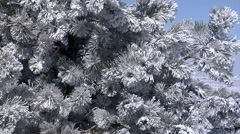 Rime Ice on Trees Stock Footage