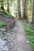 Hiking trail through conifer forest Stock Photos