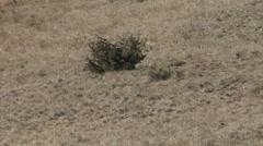 Tumbleweed Race Stock Footage