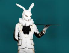 Actor posing in white rabbit suit with tray on blue background.Studio shot - stock photo