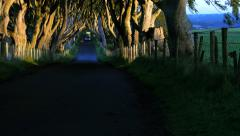 Kingsroad - The Dark Hedges Stock Footage
