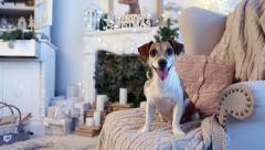 Dog is sitting in a comfortable chair Christmas interior Stock Footage