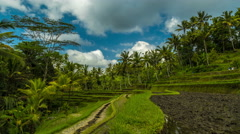 4K Timelapse. Clouds over beautiful rice terraces Stock Footage