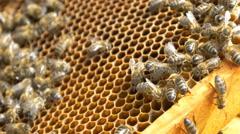 4k bees beehive beekeeper organic honey pollen honeycomb Stock Footage