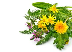Beautiful wildflowers, chamomiles, milfoil - stock photo