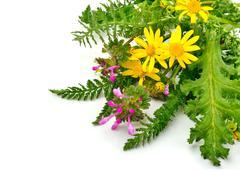 Beautiful wildflowers, yellow chamomiles, milfoil - stock photo
