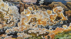 Fungus static footage , nature HD video clip Stock Footage