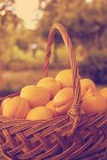 Fresh apricots in the basket Stock Photos