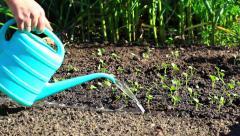 Watering shoots in  garden Stock Footage