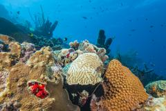 Reef - sponge - coral - caribbean Stock Photos