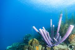 reef - sponge - coral - caribbean - stock photo
