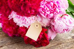 pink and red  peonies - stock photo