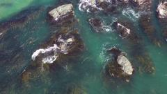 Airview seal at the ocean Stock Footage