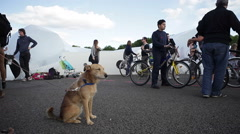 Dog on a leash in the park, people on bicycles Stock Footage