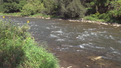 Shallow River Rapids in early Autumn Stock Footage