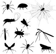 Stock Illustration of Creepy crawlies