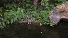 A little bird drinks water Stock Footage