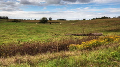 4K UltraHD A rural timelapse view of a meadow with cows Stock Footage